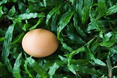 Das Ei auf Gras Lizenzfreies Stockfoto