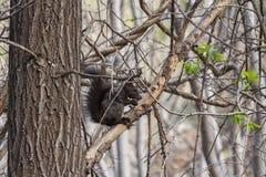 Das Eichhörnchen Lizenzfreie Stockfotos
