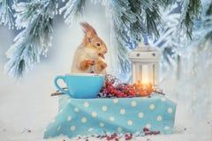 Das Eichhörnchen am Tisch isst Nüsse von einer Schale in einer Waldwinterlichtung Märchenwaldwinterbild stockbild