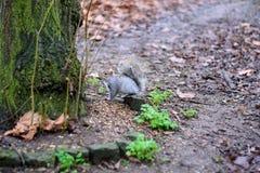 Das Eichhörnchen und der Baum Stockfotos