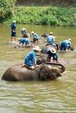 Das Elefantschongebiet der Show Lizenzfreie Stockfotografie