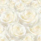 Das elegante weiße nahtlose luxuriöse Muster stieg Stockfotografie