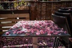 Das Ende der Cherry Blossom-Jahreszeit stockbild