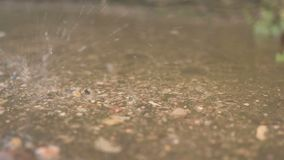 Das Ende des Winters Schmelzwasser tropft vom Dach in einem sonnigen Tag Langsame Bewegung stock video