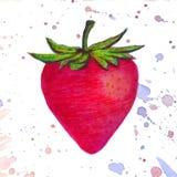 Das Erdbeeraquarell, das von buntem gemacht wird, spritzt auf weißem Hintergrund Vektorlogo, Ikone, Kartenillustration Stockbild