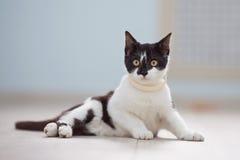 Das erschrockene Schwarzweiss-Kätzchen lizenzfreies stockbild