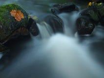 Das erste bunte Blatt vom Ahornbaum auf moosigen Steinen des Basalts in unscharfem Wasser des Gebirgsstromes. Lizenzfreies Stockbild