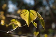 Das erste Grün der Natur ist Gold stockbilder