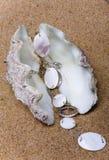 Das exotische Seeshell Lizenzfreies Stockbild