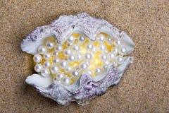 Das exotische Seeshell mit einer Perle bördelt Lügen Stockbild
