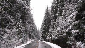 Das Fahren durch Schnee bedeckte Bäume in der Zeitlupe stock footage