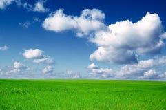 Das Feld. Lizenzfreies Stockfoto