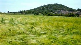 Das Feld auf dem Wind stock video