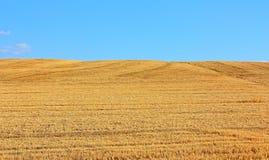 Das Feld des gemähten Weizens Lizenzfreies Stockfoto