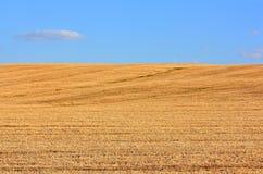 Das Feld des gemähten Weizens stockfotos