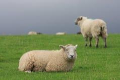 Das Feld im See-Bezirk, England Lizenzfreie Stockfotografie