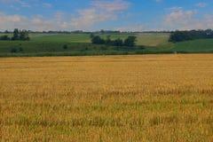 Das Feld nachdem dem Säubern des Kornes Lizenzfreie Stockfotografie