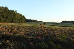 Das Feld und der einsame Baum wächst im Abstand im Abstand stockfotografie