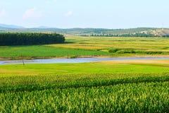 Das Feld und der Fluss Stockfoto