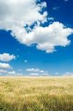Das Feld und der Himmel. Stockbilder