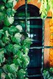 Das Fenster gestaltet mit Efeu stockfotos