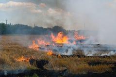 Das Feuer auf einem Weizengebiet Stockbilder