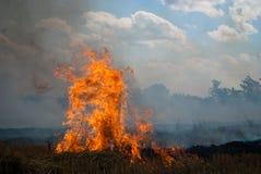 Das Feuer auf einem Weizengebiet Lizenzfreie Stockbilder
