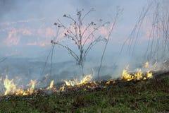 Das Feuer brannte die getrockneten Anlagen des letzten Jahres Stockbilder