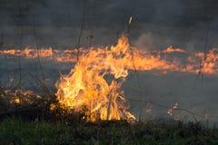 Das Feuer brannte die getrockneten Anlagen des letzten Jahres Lizenzfreie Stockfotos
