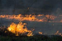 Das Feuer brannte die getrockneten Anlagen des letzten Jahres Stockfotos