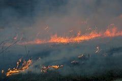 Das Feuer brannte die getrockneten Anlagen des letzten Jahres Stockbild