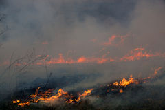 Das Feuer brannte die getrockneten Anlagen des letzten Jahres Lizenzfreie Stockbilder