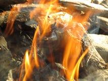 Das Feuer brennt in einer Waldlichtung Stockfoto