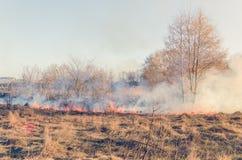 Das Feuer des trockenen Grases auf dem Gebiet Lizenzfreie Stockbilder
