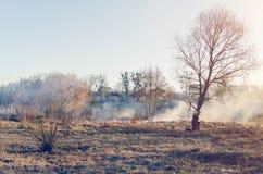 Das Feuer des trockenen Grases auf dem Gebiet Stockbilder