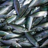 Das Fischen Stockbilder
