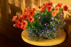 Das flores vida vermelha e azul ainda Foto de Stock Royalty Free