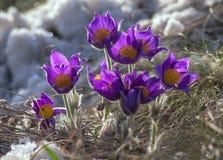 Das Flowerses im Schnee. Stockfotografie