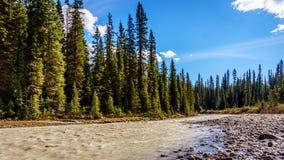 Das Fluss flüssige fom Takakkaw fällt auf Yoho River Stockfotos