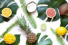 Das folhas e dos frutos do verão do conceito configuração tropical horizontalmente no fundo branco imagens de stock royalty free