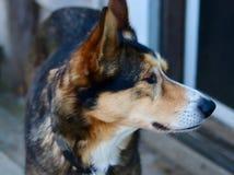 Das Foto eines Hundes, der beiseite schaut Lizenzfreie Stockbilder
