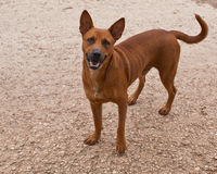 Das Foto eines Hundes, der beiseite schaut Stockfotografie