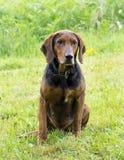 Das Foto eines Hundes, der beiseite schaut Stockfoto