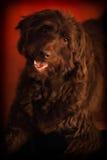 Das Foto eines Hundes, der beiseite schaut Lizenzfreies Stockbild