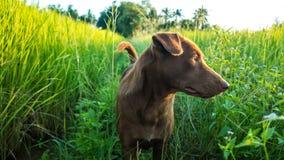 Das Foto eines Hundes, der beiseite schaut stockfotos