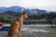 Das Foto eines Hundes, der beiseite schaut lizenzfreies stockfoto
