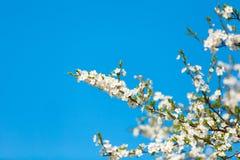 Das Frühlingsblühen Lizenzfreie Stockfotos