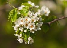 Das Frühlingsblühen Stockfoto