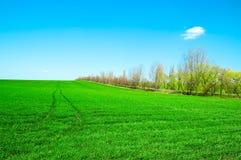 Das Frühlingsfeld. Stockbilder