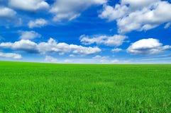 Das Frühlingsfeld. Lizenzfreies Stockbild